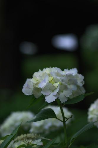 2011.06.26(IMGP0851_77mm_Glamour Glow