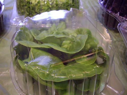 032208_lettuce