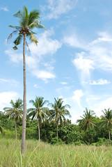 Malapascua KKC outing 2008 (zyans) Tags: cebuphotograpy