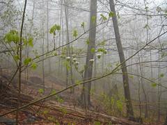 Spruce Mountain 047 (A Keeper's Jackpot) Tags: hiking adirondacks adk firetower rockpiles sprucemountain