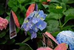 may 13 011 (k*8) Tags: floraandfauna