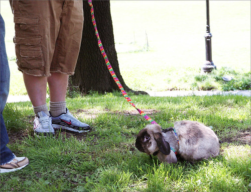 Rabbit on a Leash, Prospect Park