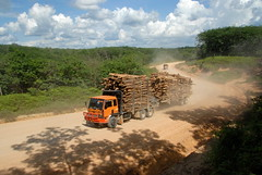 LOGGING IN SUMATRA (Claude  BARUTEL) Tags: wood mill ferry truck river paper sumatra indonesia crossing logging rapp