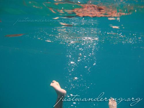 Coron, Palawan - Kayangan lake underwater pictures