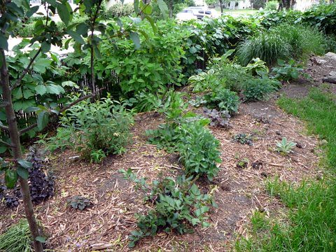 Backyard Garden 2008