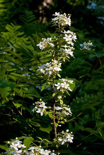 Wild Flower (1 of 6)