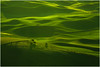 A Break In The Storm (kevin mcneal) Tags: light storm nature rural landscape greens washingtonstate rollinghills palouse easternwashington steptoebutte unature kevinmcneal wacatnp