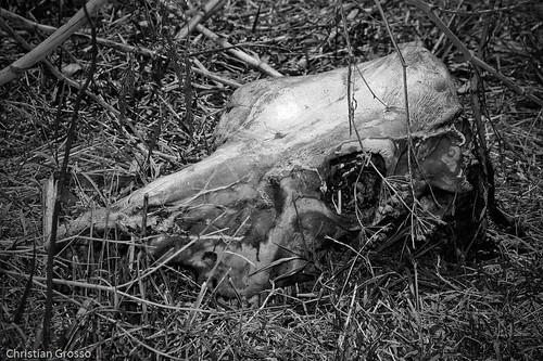 Muerte en el Campo (B&N)