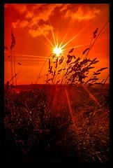 Bole Hills Sunset (Jealously Blue) Tags: sunset red orange sun grass silhouette star weeds sheffield hills bole