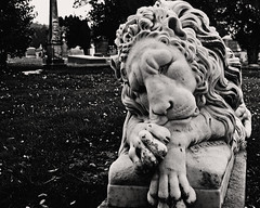 Sad Stone Lion (musicmuse_ca) Tags: bw cemetery statue stone 1025fav 510fav interestingness lion 2550fav colma cypresslawn interestingness249 i500