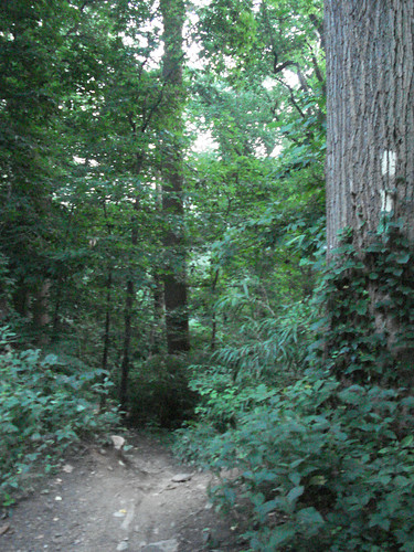 This is the trail to take from Hermit Lane to the Kelpius cave.