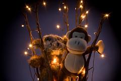 Monkey Monday ~ 20