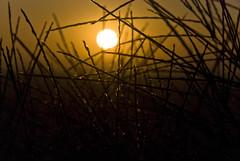 sunset (fnz007 (AKA Farinaz)) Tags: sunset naturelovers farinaz nikond80 lifetravel