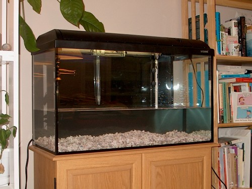 freshwaterfish settingupanaquarium 32gallontank fishtanksetup