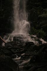 Oz3 265 Erskine Falls (Gillian in Brussels) Tags: nature coast waterfall nationalpark australia shore greatoceanroad erskinefalls greatotwaynationalpark