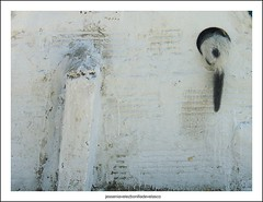 DSC04816_LA CURIOSIDAD NO MATÓ AL GATO (JESSENIA VÉLEZ BONILLAPHOTOGRAPHY) Tags: blanco pared ecuador cola colegio gato felino manta miau gatito rabo hueco rabito curiosidad minino sudamérica michu manbí mishumishu jesseniavélezbonilla