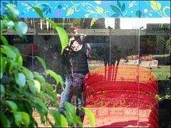 Vi (Vi) Tags: geotagged sãopaulo ira vi holambra ♫♫ floresemvocê expoflora2008 setembro2008 27ªexpoflora 11092008 geo:lat=22626242 geo:lon=47057211