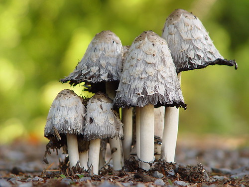 magic mushroom research photo