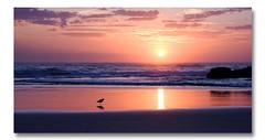 Sunrise 3 (Cher (Ross and Cher)) Tags: art beach festival sunrise dawn photo swell sculptures currumbin goldcoast skillz swellfestival qldqueenslandtopic