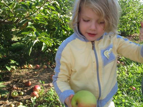 Apples08 1