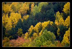 Colores de Otoo (shardox) Tags: autumn trees espaa fall forest spain rboles bosque otoo catalunya catalua vielha viella valdaran paintingwithlightandshadows