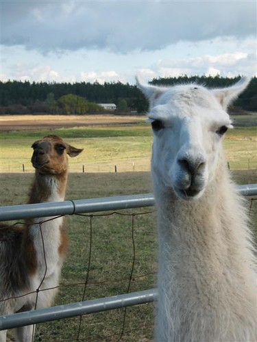 Llama guards