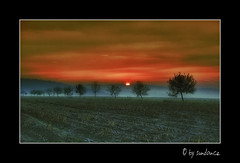 the magic of a new day (claudia hering (sundance)) Tags: morning trees mist field sunrise hdr textured