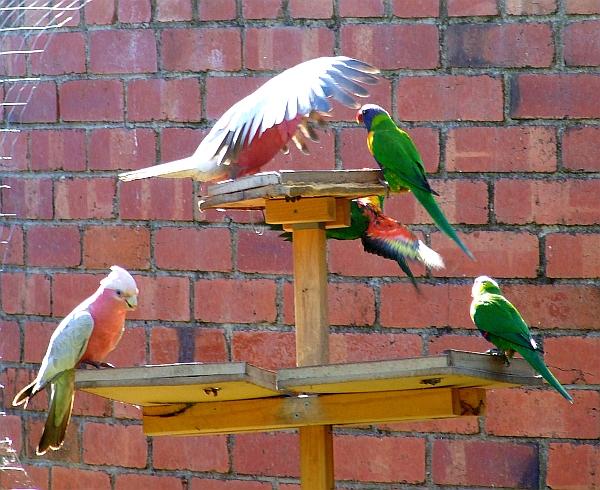 upset parrots