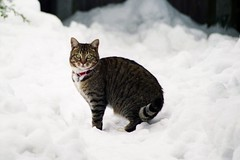 Lula II (Steve N London) Tags: winter snow church cat 1980s essex witham winterwonderland stnicolaschurch withamessex chippinghill