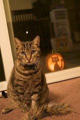 Cat with Pumpkin Cat