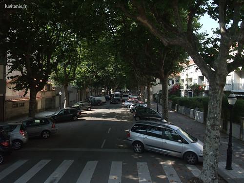Rua com árvores do Porto