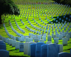 We Shall Never Forget (Sandra Leidholdt) Tags: california cemetery graveyard remember sandiego headstones graves explore tribute remembranceday veterans veteransday pointloma cimetire fortrosecrans fortrosecransnationalcemetery explored sandraleidholdt leidholdt sandyleidholdt