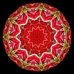 Flashyadj Merry Christmas (ftoomschb) Tags: christmas red white black detail manipulated bright creative kaleidoscope symmetry ornament round symmetrical ornate trim ornamental flashy proudshopper proudphotoshopper