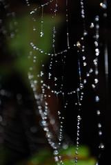 web 02 (_Sebas_) Tags: costa water america spider agua eau web central rica drop structure fractal latina gota goutte rosee toile matin volcan tela araignee poas spaciale