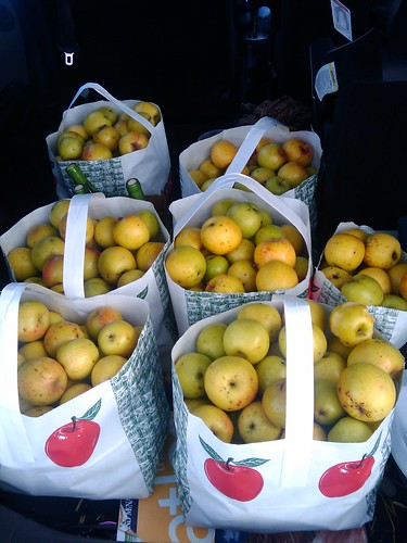 Gold Rush apples from Charlies Farm