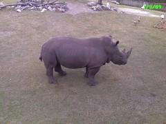 That's a big ol' rhino