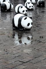 Panda reflection