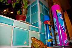 Frog in my kitchen (Thomas Tolkien) Tags: uk school copyright art home sports kitchen tom digital photography photo education nikon dof bokeh d70s amphibian frog teacher website creativecommons teaching lowdown tolkien jrr tuition neildiamond twitter robertbringhurst bringhurst thomastolkien tomtolkien httpwwwtomtolkiencom httpthomastolkienwordpresscom tolkienart notrelatedtojrrtolkien tolkienteacher tolkienteaching