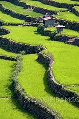 Batad - Amphitheater Undulating Greens (lagal[og]) Tags: photography nikon backpack northern banaue picturesque batad ramos ifugao oggie luzon inspiredbylove northernphilippines worldtrekker lagalog