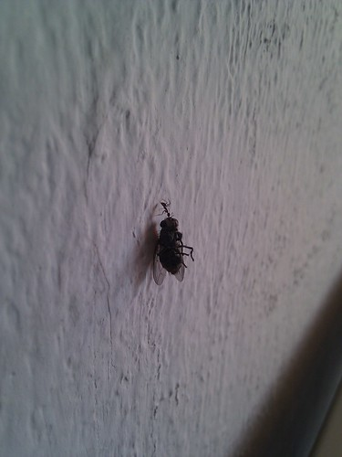 Damn ant