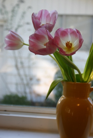 little room tulips