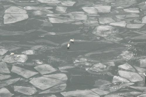 Border Lake Image