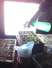 SAD Seeds