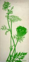 Marushka - Queen Anne's Lace (green)