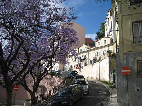 Violet tree in Alfama