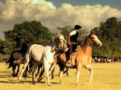 La madrina tordilla (Eduardo Amorim) Tags: horses horse southamerica argentina criollo caballo cheval caballos cavalos pferde herd cavalli cavallo cavalo gauchos pferd pampa hest hevonen chevaux gaucho  amricadosul hst gacho  campero amriquedusud provinciadebuenosaires  gachos  sudamrica sanantoniodeareco suramrica amricadelsur  areco sdamerika gregge crioulo troupeau caballoscriollos herde criollos  tropillas  pampaargentina camperos americadelsud tropilhas tropilla  crioulos cavalocrioulo americameridionale tropilha caballocriollo campeiros campeiro eduardoamorim cavaloscrioulos pampaargentino
