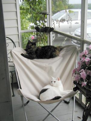 B & K Hanging on the Butterfly Chair
