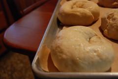 Peter Reinhart's Bagels - Let Rise