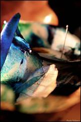 bleu (PaulaVelasco) Tags: naturaleza azul still alive acuarela tinta muerta agujas cebolla