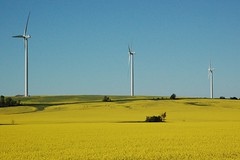 July 22,  2008 011 (Jeannette Greaves) Tags: canada manitoba canola windfarms turbines stlon